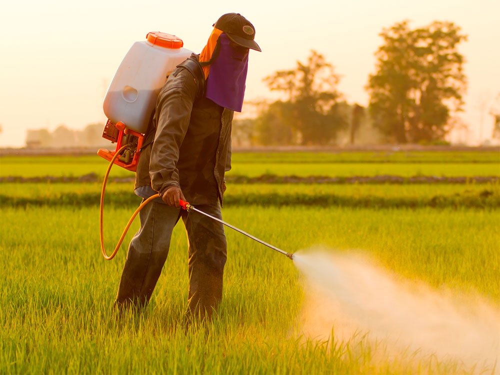 Man manually applying pesticides on fields