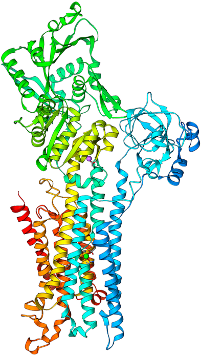 CA2+ATPASE Molecule - Illustration